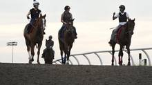Scenes from the morning workout at Woodbine Racetrack on June 27, 2013. (MOE DOIRON/THE GLOBE AND MAIL)