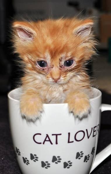 Sometimes I dream of kittens in tea cups. . . (AP)