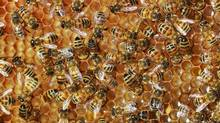 David Zinger says workplaces can learn from how bees collaborate. (Jeff Vinnick For The Globe and Mail)