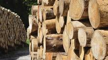 Investors are betting on increased demand for lumber and specialty wood products used in home renovation to fire up the shares of Western Forest Products Inc., the largest lumber producer on the B.C. coast. (Thinkstock)