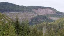 Freshly cut old growth forests are seen near Avartar Grove outside Port Renfrew on Vancouver Island, B.C. Thursday, Sept. 29, 2011. (JONATHAN HAYWARD/THE CANADIAN PRESS)