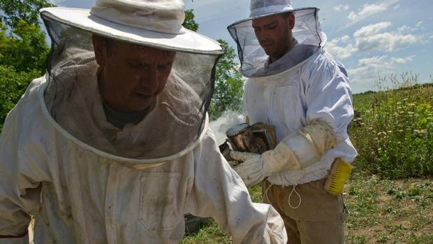 Master beekeeper Eugene Roman prepares to pull a frame from a hive as beekeeper and son William Roman follows closely behind with a smoker, used to clear the hive at Rosewood Estates's 21st Vineyard and Honey Processing Location in Jordan, Ontario, July 25, 2012.