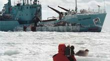 The Sea Shepherd owned by environmentalist Paul Watsonm March 13, 1998 (Brian McInnis/ The Canadian Press/Brian McInnis/ The Canadian Press)