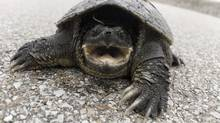 The Cayman Islands is facing international pressure to make its finance industry more open and responsive to investors. In 2008, one desperate investor trying to reach a hedge fund director was mistakenly put through to a turtle farm. (Thinkstock/Thinkstock)