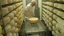 A cheese maker at Laiterie Charlevoix brushes the rinds of ripening wheels of Hercule de Charlevoix. (Tad Seaborn for The Globe and Mail)