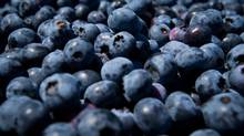 Knowledge of China's air and soil pollution is also spreading, pushing more people to consider imported groceries. That presents a potentially massive opportunity for companies like Oxford Frozen Foods, which has started selling blueberries in China. (DARRYL DYCK/THE CANADIAN PRESS)