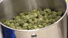 Cured flowers of cannabis intended for the medical marijuana market are seen at a licensed producer facility in Moncton, N.B., in an April 14, 2016, file photo. Ottawa is now requiring the country's licensed medical cannabis producers to screen their products for all banned pesticides. (Ron Ward/THE CANADIAN PRESS)
