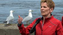 A couple of gulls hang out as Ontario Premier Kathleen Wynne makes an election stop on the edge of the Ottawa River in Ottawa on May 8 (Sean Kilpatrick/THE CANADIAN PRESS)