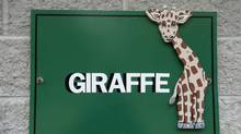 The giraffe enclosure at the Greater Vancouver Zoo in Aldergrove. (Laura Leyshon for The Globe and Mail)