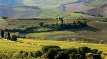 Tuscany's beauty is certain to steal your heart. (FILIPPO MONTEFORTE/Filippo Monteforte/Getty)