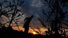 An Afghan farmer works on his field at sunset on the outskirts of Mazar-e-Sharif, northern Afghanistan, Tuesday, April 22, 2014. (Mustafa Najafizada/THE ASSOCIATED PRESS)