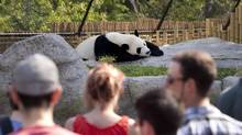 An association of Canada's advertising agencies is calling for the sector to boycott the Toronto Zoo's search for a firm to work on its 2017 marketing campaign. (Moe Doiron/The Globe and Mail)