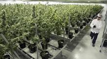 Canopy Growth's production facility in Smiths Falls, Ont. (Lars Hagberg/AFP/Getty Images)