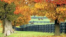 The genteel precision of the immaculately fenced rolling hills tells visitors they've crossed into Kentucky. (Gene Burch)