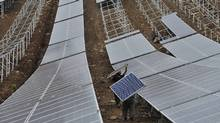 In China, new renewable energy plant construction has now surpassed investments in coal generation. The country has embarked on an enormous effort to build solar and wind power generating facilities, along with a massive electrified high-speed rain network. (Jianan Yu/REUTERS)