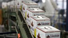 Cans of Molson Canadian are boxed along the can line at the Molson Breweries in Vancouver. (Jonathan Hayward/THE CANADIAN PRESS/Jonathan Hayward/THE CANADIAN PRESS)
