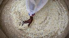 Grandiose projects to build large-scale agriculture in Africa's Sahel region are hardly useful when so many of the zone's residents are small-scale farmers or semi-nomadic herdsmen. (Ben Curtis/Associated Press)