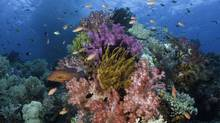 Many regard the coral reefs of Raja Ampat in eastern Indonesia as the epicentre of the Coral Triangle. (Darryl Leniuk for The Globe And Mail)
