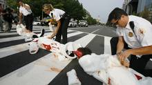 PETA members dressed as a bloody seals are arrested by Secret Service police officers after blocking the traffic in front of the Canadian Embassy in Washington, Wednesday Sept. 16, 2009, where they asked Canadian Prime Minister Stephen Harper to stop the seals killing. (Jose Luis Magana)