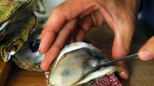 PRINCE EDWARD ISLAND: Catch and shuck your dinner PEI seafood is prized around the world, and it tastes better when you catch it yourself. Join Tranquility Cove fishermen as they haul in their traps, or learn about oysters from three-time Canadian shucking champ John Bil at his Ship to Shore restaurant. (Sheryl Nadler/The Canadian Press/Sheryl Nadler/The Canadian Press)