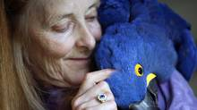 Wendy Huntbatch holds Andy, a 20-year-old hyacinth macaw, one of over 500 abandoned and homeless birds at the World Parrot Refuge. (Deddeda Stemler for The Globe and Mail)