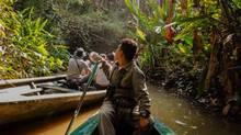 Keep your camera ready on a ride through the Tambopata Reserve, a sanctuary for some of the Amazon's most endangered creatures. (Carolyn Ireland/The Globe and Mail)