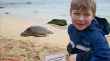 When your kids would rather not get in the water, try hanging out with 90-kilogram sea turtles on the North Shore.