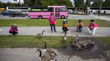 Chinese tourists snap photos of Canada geese in Vancouver's Stanley Park in June. (John Lehmann/The Globe and Mail)