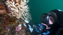 The cold waters of the Pacific teem with colour and life. Some of the most beautiful parts of B.C. lie under the surface of the ocean, say divers, who come from around the world to explore the colourful marine life. (The Canadian Press/The Canadian Press)