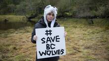 Miley Cyrus and her brother Braison travelled to the Great Bear Rainforest on the central coast of British Columbia in late September, 2015, to join local wildlife conservationists from Pacific Wild on a research trip. The pop star is a vocal opponent of BC's wolf cull, which started last January and has drawn international condemnation from environmentalists. The B.C. government has defended it as necessary to save dwindling caribou populations, but briefing notes prepared for meetings between B.C. Environment Minister Mary Polak and industry representatives in 2014 suggest the government was prompted by the forest industry to launch the wolf cull because of fears a federal recovery plan for caribou would demand more logging areas be set aside. (April Bencze/Pacific Wild)