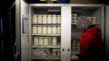 Felicity Wilson, farm employee, organizes raw milk products for pickup by share holders at the Home on the Range farms in Chilliwack, British Columbia, Monday, January 3, 2011. (Rafal Gerszak for The Globe and Mail/Rafal Gerszak for The Globe and Mail)