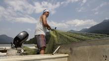 Tyrone McNeil of the Sto;lo Tribal Council checks his nets for sockeye salmon (Lyle Stafford)