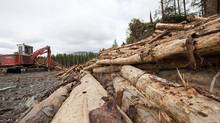 Logs at a clear cut site in the San Juan River Valley, B.C., in in 2010, less than a kilometre away from the biggest Douglas-fir tree in the world. (Arnold Lim for The Globe and Mail/Arnold Lim for The Globe and Mail)