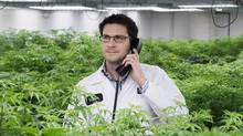 Tweed's VP and general counsel, Mark Zekulin, inside the grow room, home to the company's mother plants. (Eugen Sakhnenko for the Globe and Mail)