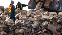 A Canada Food Inspection Agency employee, left, looks on as beef from the XL Foods cattle processing plant is dumped at a landfill site near Brooks, Alta. (JEFF McINTOSH/THE CANADIAN PRESS)