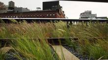 "A memory of the line's wild, weedy past is part of the landscape design by firm James Corner Field Operations. ""The idea was to make a place for people that didn't destroy the very properties that made the High Line such a magical phenomenon,"" says landscape architect James Corner. ""A lot has to do with retaining that quality of wildness and melancholy."" (Spencer Platt/2009 Getty Images)"