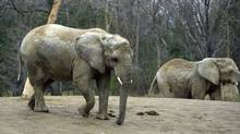 Elephants at the Toronto Zoo's enclosure in 2003. (Fred Lum/The Globe and Mail)