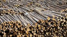 Forest Products Association of Canada said its companies aim to remove 30 megatonnes a year of carbon dioxide from the atmosphere by 2030. (Ben Nelms/Bloomberg)