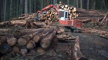 U.S. forestry companies want to limit Canadian timber shipments to the United States and allege provinces subsidize companies through below-market rates for harvesting from Crown land. (JONATHAN HAYWARD/THE CANADIAN PRESS)