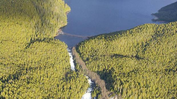First nations aim to capitalize on carbon in Great Bear ...
