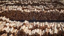 Fortunes of timber industry will be dependent on how protectionist U.S. president-elect will change trade relations. (DARRYL DYCK For The Globe and Mail)