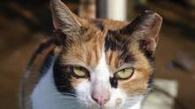 Cat close up (Thinkstock)