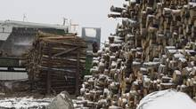 "Quebec's forestry industry says Ottawa is putting the province at a ""serious competitive disadvantage"" ahead of the deadline to extend Canada-U.S. softwood lumber agreement. (Jacques Boissinot/The Canadian Press)"