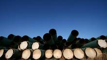 Some 15,000 pieces of pipe for TransCanada Corp.'s Keystone XL pipeline lie in a field in North Dakota on April 23, 2013. photo by Nathan VanderKlippe (The Globe and Mail)