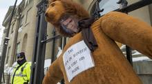 An effigy of Nova Scotia Premier Stephen McNeil is hung outside the legislature in Halifax on Friday, Feb. 17, 2017, as teachers participate in a one-day, province-wide strike to protest legislation imposing a four-year contract. (Andrew Vaughan/The Canadian Press)