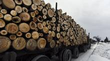Logging trucks hauling logs roll through Fort Frances, Ont. en route to a sob (oriented strand board) mill in nearby Barwick, Ont. (Fred Lum/The Globe and Mail)