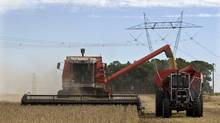 Farmers harvest soybeans in Argentinian town of Estacion Islas. Argentina is the world's No. 1 supplier of soy oil, a feedstock for the booming international biofuels sector, and is a top soybean and corn exporter. (Enrique Marcarian/Reuters/Enrique Marcarian/Reuters)