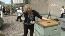 Laureen Harper was stung by a bee while inspecting a hive at the Royal York hotel in Toronto on sunday, july 27, 2014. (CP24)