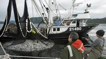 A commercial fishing boat begins harvesting herring off the central coast of B.C. (Courtesy Pacific Wild)