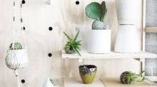 'Reintegrating greenery into decor is about wanting to feel a connection to nature,' says Benoit Godin, owner of plant design firm Vertuose Inc. (Vertuose)
